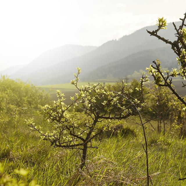 Bio kvalita roste v přírodě sama od sebe