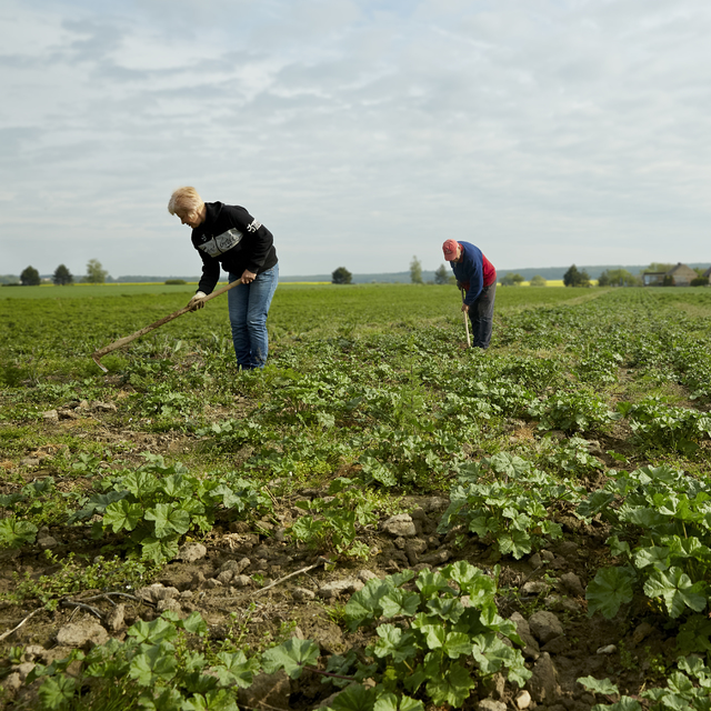 Farma Junek disponuje rozsáhlými pozemky