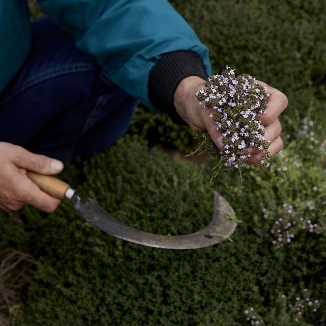 Srp je dodnes důležitým nástrojem bylinkáře