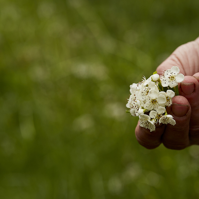 Jarní květy pro zdraví