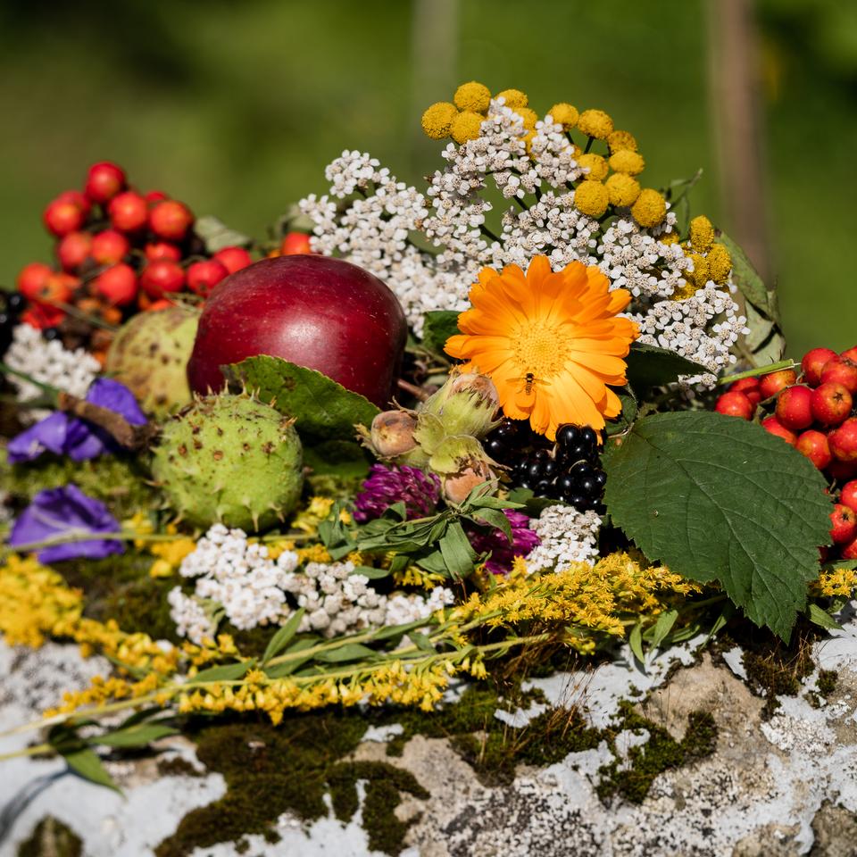 Vítej podzime!