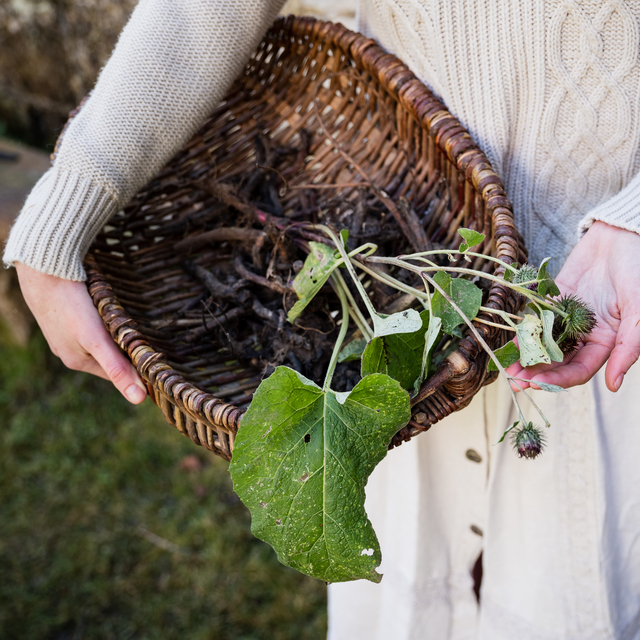 Síla podzimních kořenů