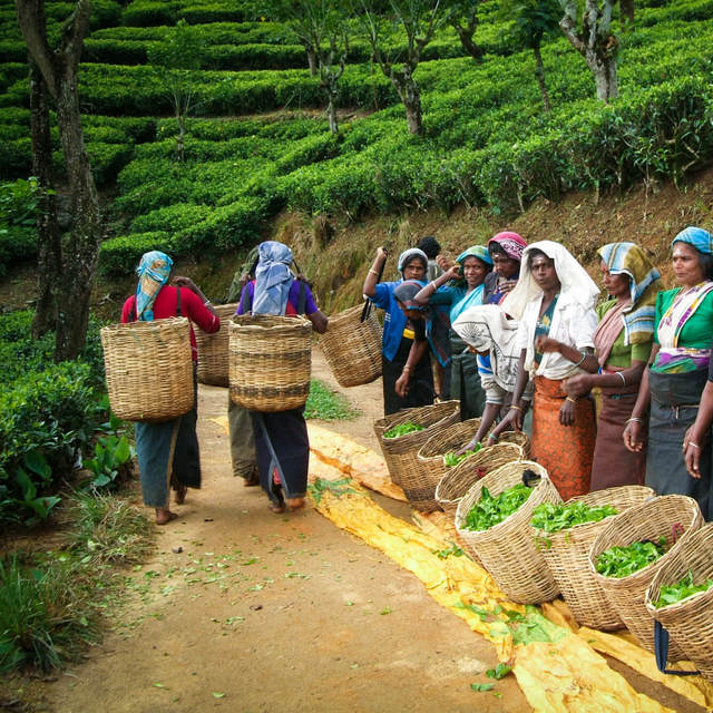 Dilmah Tea Estate - Kataboola