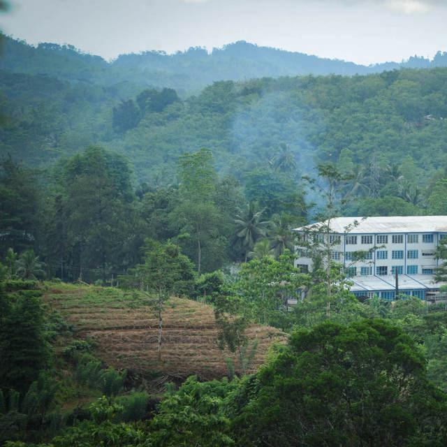 Dilmah Tea Estate - Thalgaswella