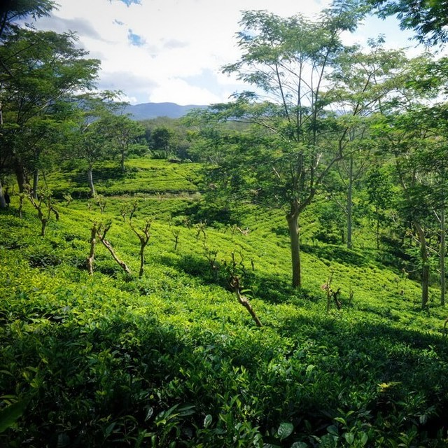 Wellandura