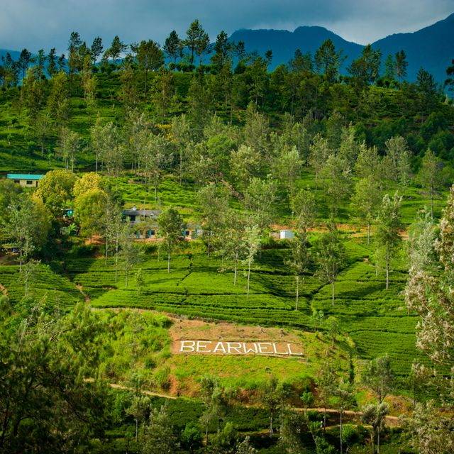 Dilmah Tea Estate - Bearwell - DSC_8426.jpg